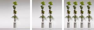 okenní farma - bylinky, rostlinky